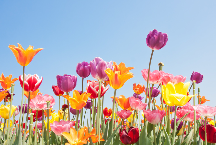 Beautiful coloured flowers with copyspace for text