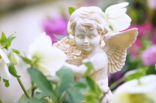 angelflower2